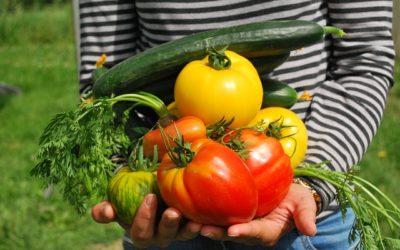 Spar penge med en køkkenhave