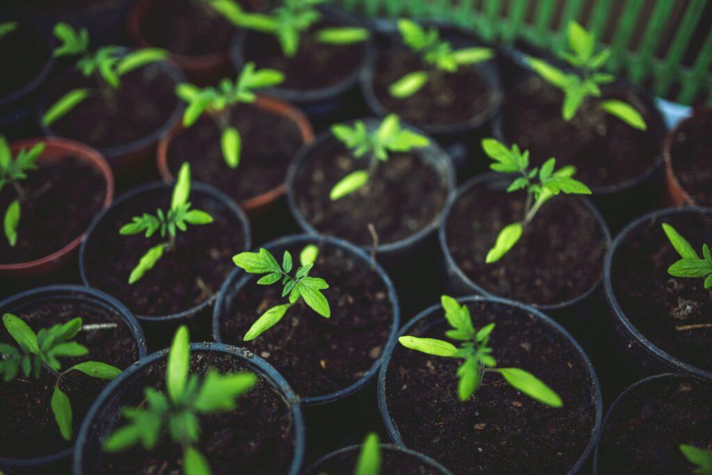 Plantespire