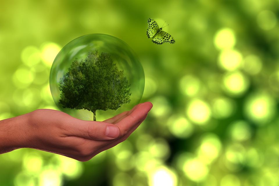 Grøn omstilling